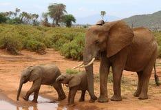 Elefanten med dess behandla som ett barn i Afrika Arkivbild