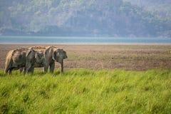Elefanten am Morgen lizenzfreie stockfotos