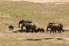 Elefanten in Ostpark Tsavo stockfotos