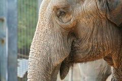 Elefanten schließen oben Lizenzfreie Stockfotografie
