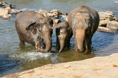 Elefanten sind, waschend badend und im Fluss, unter braunen Steinen stockfotografie
