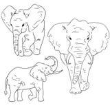 Elefanten skissar på vit bakgrund Ställ in av att skissa djur som dras av frihands vektor illustrationer