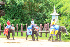 Elefanten spielen ein Spiel Stockfotografie