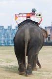 elefanten taxar Fotografering för Bildbyråer