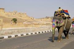 elefanten taxar Arkivbilder