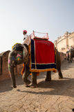 Elefanten turnerar på Amber Fort Arkivbild