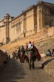 Elefanten turnerar på Amber Fort Arkivfoto