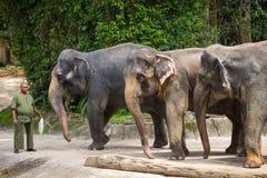 Elefanten und ihr Trainer im Singapur-Zoo Lizenzfreies Stockbild