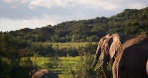 Elefanten und Sonnenuntergang Stockfotos