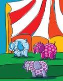 Elefanten und Zirkus Stockbild