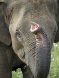 Elefanten vänder mot Royaltyfri Foto