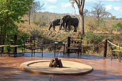 Elefanten w obozie Fotografia Stock