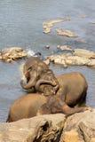 Elefanter är bada och tvätta sig i floden, Royaltyfria Bilder