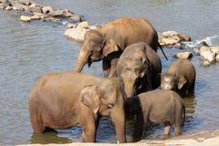 Elefanter är bada och tvätta sig i floden, Fotografering för Bildbyråer