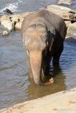 Elefanter är bada och tvätta sig i floden, Royaltyfri Foto