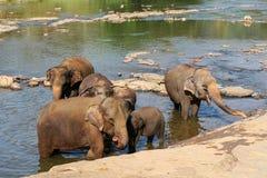 Elefanter är bada och tvätta sig i floden, Arkivfoto