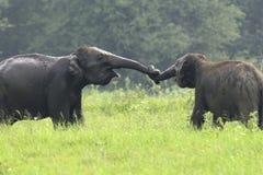 elefanter royaltyfria foton