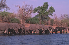 elefanter arkivfoton