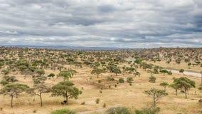 Elefanter & akacia, Tarangire nationalpark, Manyara, Tanzania, Royaltyfri Bild
