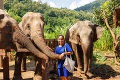 Elefanter för flickasmekning tre på fristaden i Chiang Mai Thailand royaltyfri fotografi