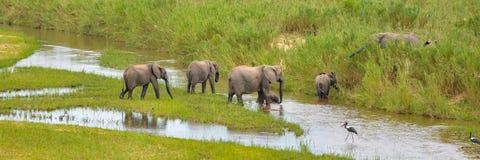 Elefanter flock arkivbilder