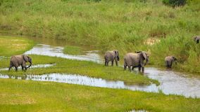 Elefanter flock royaltyfri foto
