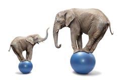 Elefanter har en gyckel. Arkivbilder