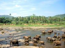 Elefanter har kommit att bada Royaltyfria Bilder