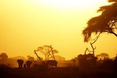 Elefanter i aftonen tänder royaltyfri fotografi