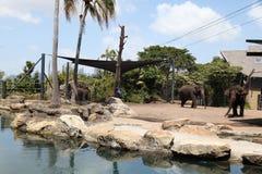 Elefanter i den Taronga zoo Australien Arkivfoto