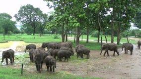 Elefanter i den Udawalawe nationalparken arkivfilmer
