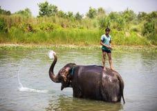 Elefanter i floden Arkivbild