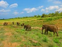 Elefanter i NP Udawalwe royaltyfria foton