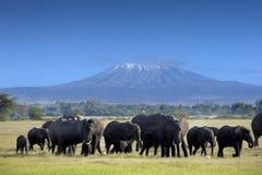 Elefanter i Tsavo öst parkerar royaltyfria bilder