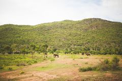 Elefanter landskap i Thailand bangkok royaltyfri foto