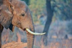 elefanter namibia arkivfoto
