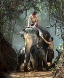 Elefanter och mahout arkivfoton