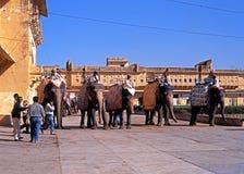 Elefanter på Amber Fort arkivfoto
