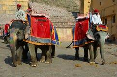 Elefanter på Amber Fort eller slotten, nr Jaipur, Indi Arkivfoton