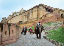 Elefanter på Amber Fort i Jaipur, Indien Arkivbild