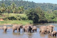 Elefanter på en brunnsort Royaltyfria Foton