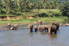 Elefanter på en brunnsort Royaltyfri Bild