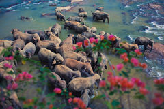 Elefanter på floden Arkivbilder