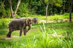 Elefanter plattforer i mitten av skogen Arkivbild