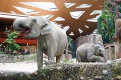 Elefanter rik zoo för ZÃ-¼ arkivbilder