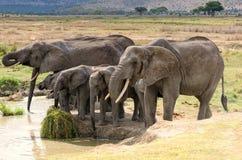 Elefanter Serengeti Arkivfoto