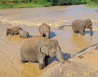 Elefanter som badar i floden Royaltyfria Bilder