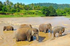 Elefanter som badar i floden Arkivfoton