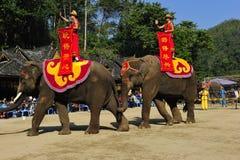 Elefanter som den turist- dragningen, Kina royaltyfria foton