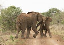 elefanter som leker barn royaltyfri bild